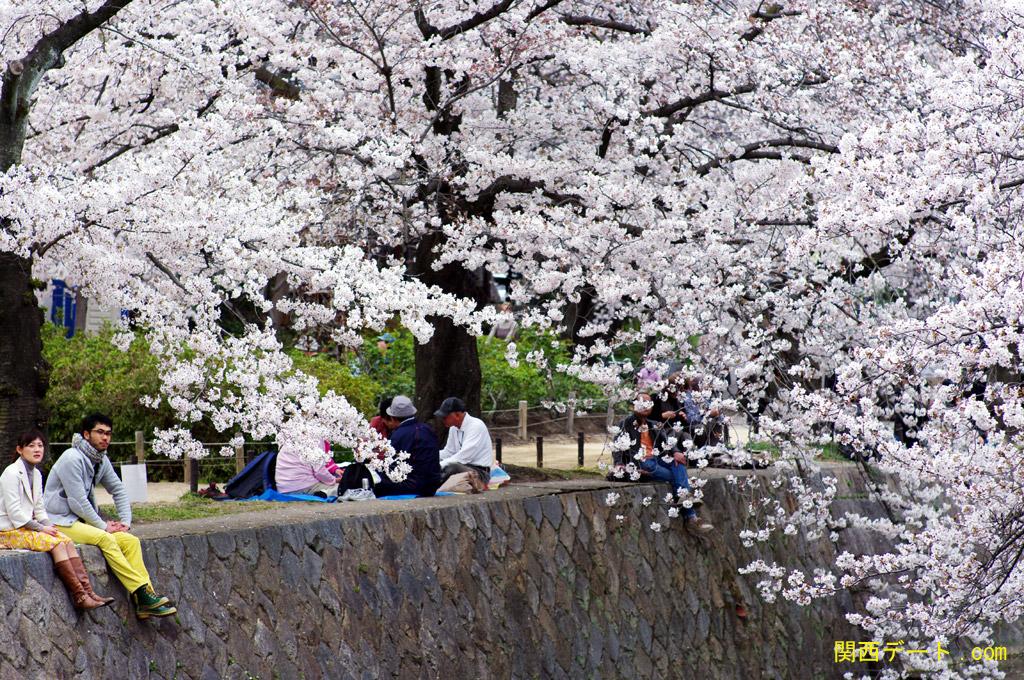 夙川でお花見